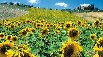 chianti esplorare la Toscana Firenze tour in Italia da Milano tour in moto in toscana