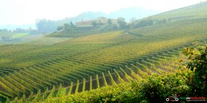 Vinyards on the side of a hill on our Top Class motorcycle tour of the north west of Italy