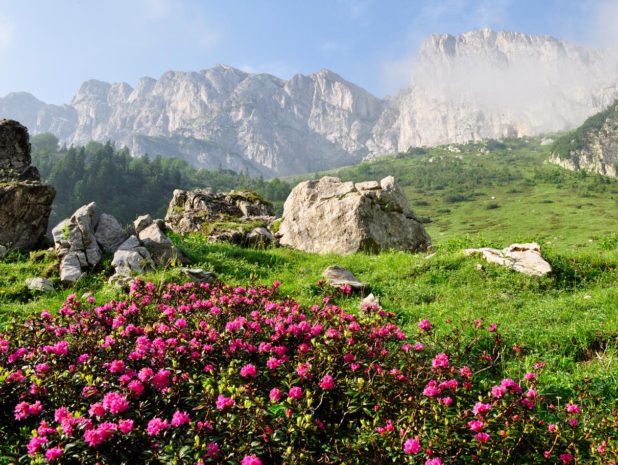 Parco_Terre_dei_Savoia_Piemonte