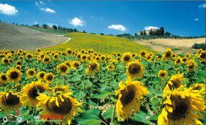 five lands motorcycle touring sardinia island traveling through tuscany tuscany